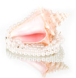 Beautiful exotic shell and pearls Stock Photography