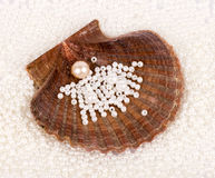 Beautiful exotic shell and pearls Royalty Free Stock Photo