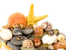 Beautiful exotic shell and stones Stock Photo