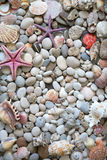 Beautiful exotic shell and stones Royalty Free Stock Photography