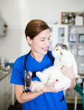 Veterinary woman with cat stock photography