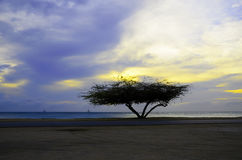 Beautiful exotic Tree under the magic golden hour Stock Images