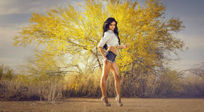 Beautiful exotic young woman long hair. Beautiful exotic young woman wearing denim jean shorts and top - posing in Arizona desert, USA Stock Images