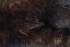 Beautiful expensive dark brown fur of the sable. View Royalty Free Stock Photography