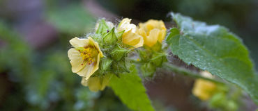 Beautiful and extravagant micro yellow flower Stock Images