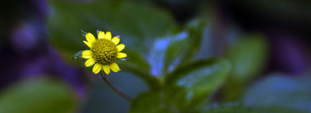 Beautiful and extravagant micro yellow flower Royalty Free Stock Photo
