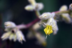 Beautiful and extravagant micro yellow flower Stock Photos