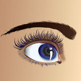 Beautiful eye. Beautiful attractive female eye with expressive look Royalty Free Stock Image