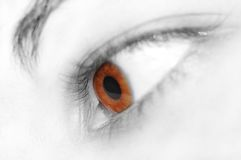 Beautiful eye. Brown eye Stock Images