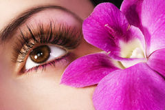 Beautiful eye stock photos