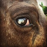 Beautiful is in the eye of the beholder. Down on the farm Royalty Free Stock Photography