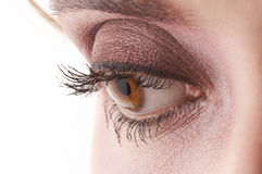 Beautiful eye with black and brown eyeshadow and m. Beautiful hazel eye with black and brown eyeshadow and mascara royalty free stock photography