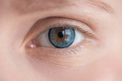 Beautiful eye in blue soft contact lens close up macro. Beautiful brown eye in blue soft contact lens close up macro royalty free stock images