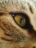 Beautiful eye cat royalty free stock images