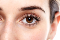 Beautiful eye. Stock Images