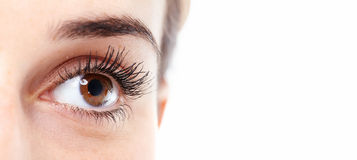 Beautiful eye. Royalty Free Stock Photography