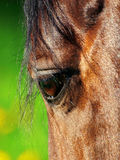 The beautiful eye of the horse Stock Photo