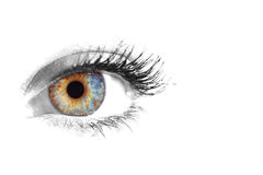 Beautiful Eye of Woman Royalty Free Stock Photos