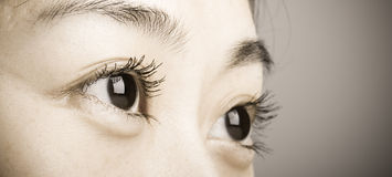 Beautiful eyeball. With long eyelashes from an asian female face Stock Photography