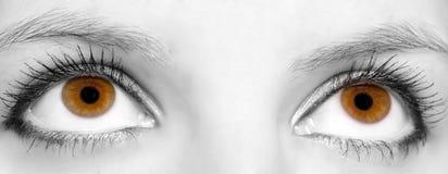 Beautiful eyes. Close-up of Beautiful brown eyes Royalty Free Stock Photography