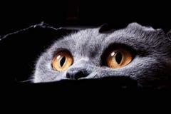 Beautiful eyes of cat stock photography
