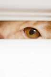 Beautiful eyes peeping over the cat out of the Stock Image