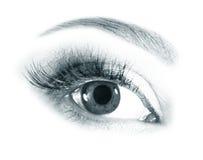 beautiful eyes woman Fotografering för Bildbyråer