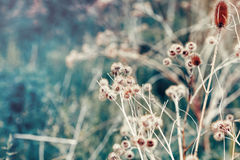 Beautiful fairy dreamy magic burdock thorns, toned with instagram vsco filter in retro vintage color pastel washed out style Stock Image