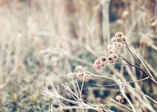 Beautiful fairy dreamy magic burdock thorns, toned with instagram vsco filter in retro vintage color pastel washed out style Stock Photos