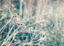 Beautiful fairy dreamy magic burdock thorns, toned with instagram vsco filter in retro vintage color pastel washed out style Royalty Free Stock Photo