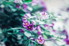 Beautiful fairy dreamy magic purple flowers with light green leaves Royalty Free Stock Photos