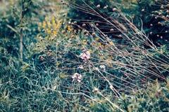 Beautiful fairy dreamy magic wild field flowers, grass and straws Stock Photo
