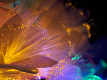 Beautiful fairy glowing flowers. Abstract color background of fairytale glowing flowers macro Stock Photos