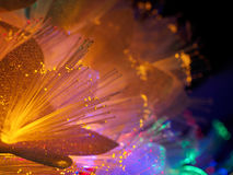 Beautiful fairy glowing flowers. Abstract color background of fairytale glowing flowers macro Royalty Free Stock Photos