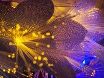 Beautiful fairy glowing flowers Stock Photography