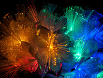 Beautiful fairy glowing flowers. Abstract color background of fairytale glowing flowers macro Royalty Free Stock Images