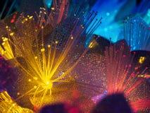 Beautiful fairy glowing flowers Stock Image