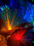 Beautiful fairy glowing flowers. Abstract color background of fairytale glowing flowers macro Stock Photography