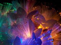 Beautiful fairy glowing flowers Royalty Free Stock Photos