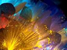 Beautiful fairy yellow glowing flowers. Abstract color background of fairytale glowing flowers macro Stock Photos