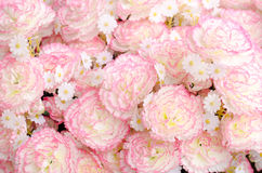 Beautiful of fake white and pink pattern flower background Royalty Free Stock Image