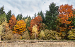 Beautiful fall, autumn forest landscape Royalty Free Stock Photos