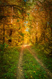 Beautiful fall autumn forest landscape old road Royalty Free Stock Images
