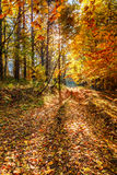 Beautiful fall autumn forest landscape old road Stock Image