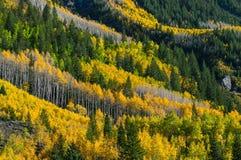 Beautiful Fall Background Stock Image
