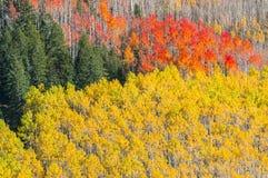 Beautiful Fall Background Stock Photography