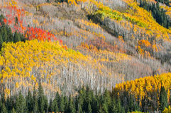 Beautiful Fall Background Stock Images