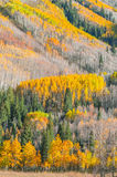 Beautiful Fall Background Royalty Free Stock Image