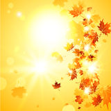Beautiful fall background  with falling leaves Stock Photography