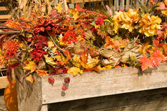 Beautiful fall background Royalty Free Stock Image